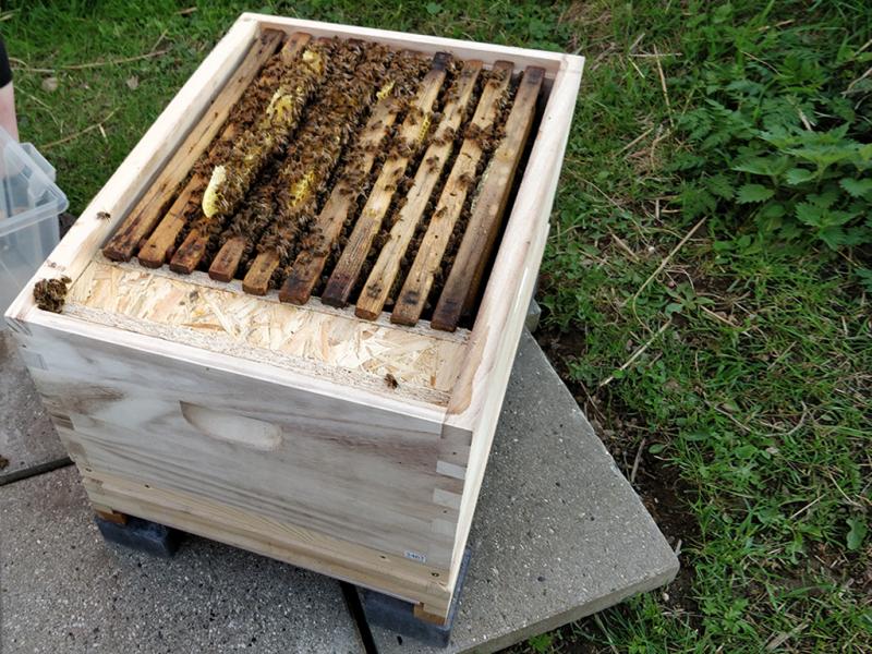 Første kig til bierne.